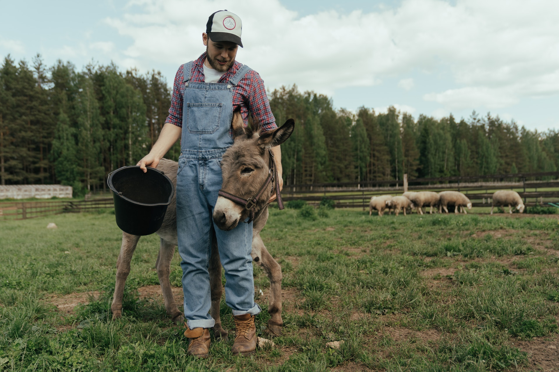 Build your Homestead – A Realistic Approach